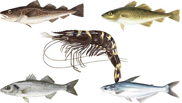 Learn About the Fish