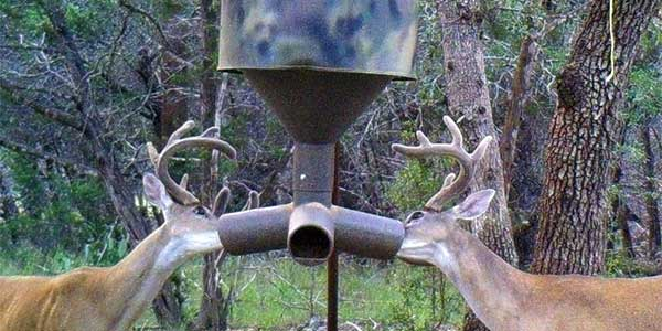 How To Make Homemade Deer Feeder: 9