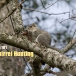 Squirrel Hunting 101 - How to Hunt Squirrels