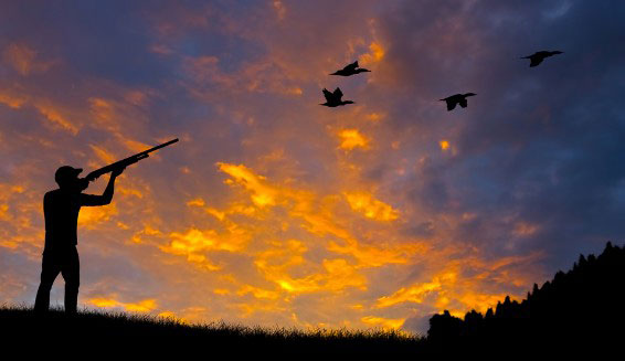 Things to Consider While Buying a Choke for Better Dove Hunting